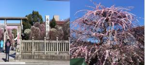 梅の香り~春がそこまで~